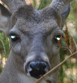 Hunting season is here: Deer can see more than you think.